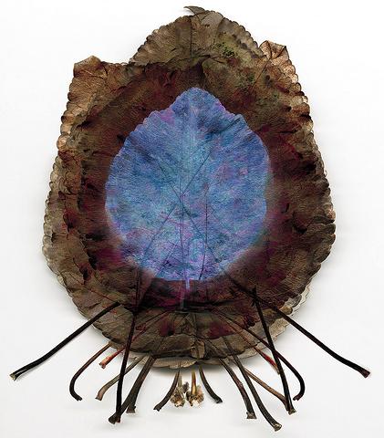 leaf photogrphy